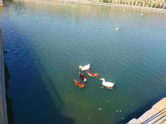 اولین رودپارک در مشهد
