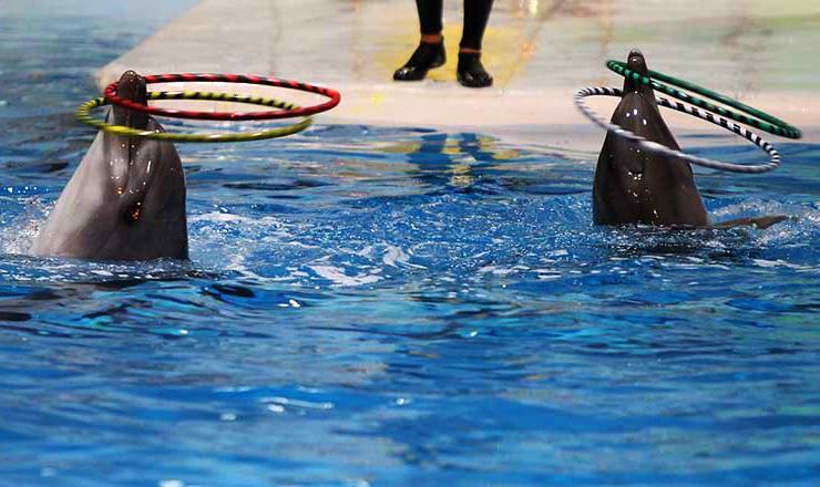 حرکات نمایشی دلفین ها