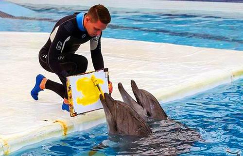 آموزش به دلفین ها در دلفیناریوم