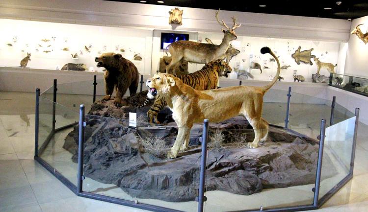حیوانات پارک بازی ما و پستانداران پارک پروفسور بازیمای مشهد